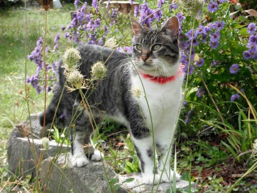 cat-in-garden-christine-majul-flickr-710x533