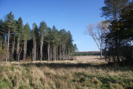 Edge_of_Thetford_Forest_-_geograph.org.uk_-_1025834